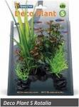 SF DECO PLANT ROTALA S