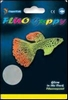 SF FLUO GUPPY
