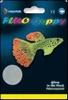 SF FLUO GUPPY