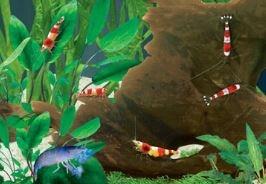garnalen kreeft slakken kikker