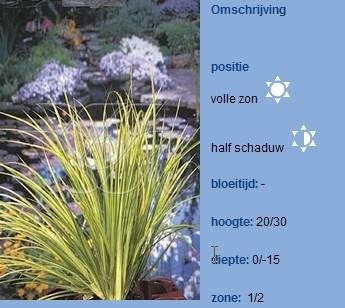 oever / moerasplanten