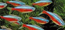 scholenvissen