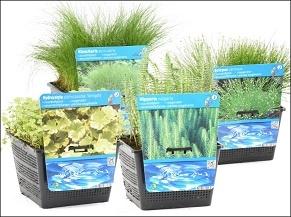waterplanten/zuurstofplanten